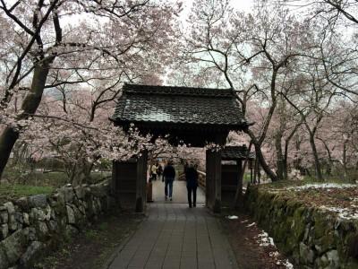 高遠城の桜 Takato Castle CherryBlossoms 2015.4.08