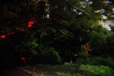 Fireflies Ueda Kitsunezuka